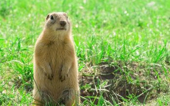Don't Be a Gopher: Nonprofit Marketing and Program Sustainability